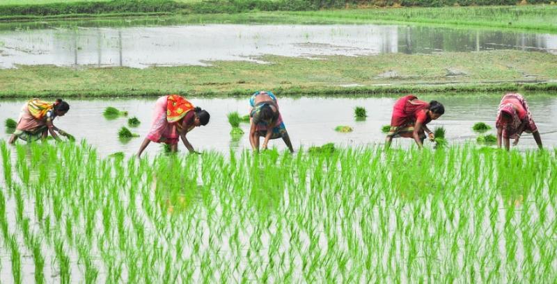 В Індії фермери протестують через «чорні закони»